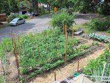 Urban Farming in Madison, WI