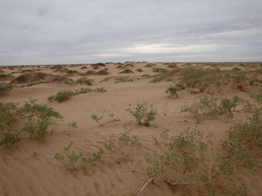 Coppice dunes from the Jilantai area, China. ©Science China Press